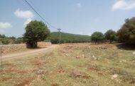 قطع اشجار سنديان في مشروع متنزه عجلون الجديد