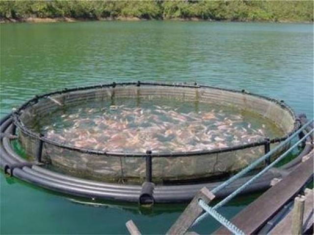 ارتفاع إنتاج مزارع تربية الأسماك في 2018